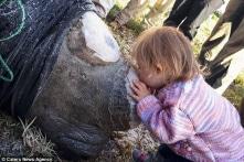 Xúc động cảnh bé gái nhẹ nhàng hôn chú tê giác bị cưa sừng