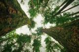 Các loài cây giao tiếp với nhau như thế nào?