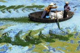Trung Quốc: 40 loài thực vật tuyệt chủng do môi trường bị hủy hoại
