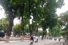 Từ 12/9, Hà Nội chặt, chuyển 130 cây xanh trên đường Kim Mã