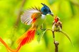 chim thiên đường