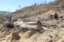 61 ha rừng bị tàn phá: Sau hạt trưởng, hạt phó, đề nghị kiểm điểm Chủ tịch huyện