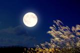 Nghi lễ ngắm trăng thanh nhã tại xứ sở mặt trời mọc