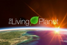 Video công phu của NASA: Sự thay đổi của thực vật toàn Trái Đất trong 20 năm qua