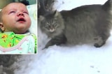 Chú mèo hoang sưởi ấm cho em bé bị bỏ rơi lạnh cóng trên đường