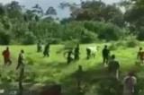 Venezuela: Người dân thiếu đói, phải giết gia súc, cướp bóc thực phẩm (video)