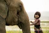 Thương con voi, thương cả chúng ta