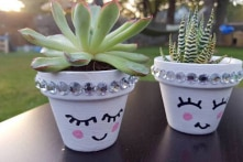 5 thí nghiệm cho thấy cây cối cũng có cảm xúc