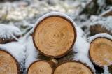 """Chế tạo ra loại """"gỗ siêu cứng"""" có thể thay thế cho thép"""
