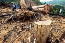 Quảng Nam: Kỷ luật nhiều cán bộ liên quan đến vụ phá rừng Tiên Lãnh