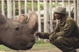 Con đực cuối cùng của loài tê giác trắng phương Bắc đã qua đời