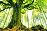 Tính thật thà như là những cái rễ của một cái cây