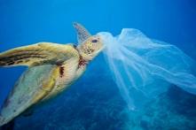 Vì sao các loài động vật biển không thể ngừng ăn rác thải nhựa?