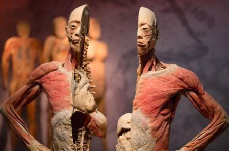 Anh Quốc: Giới trí thức yêu cầu chính phủ đóng cửa triển lãm thi thể người