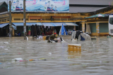 Khánh Hòa chuẩn bị ứng phó bão mới, mạnh hơn bão số 8