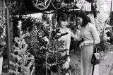 Tình nghĩa Sài Gòn: Sài Gòn mùa Giáng sinh