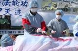 Thu hoạch nội tạng