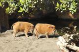 Kỳ thú Valencia Bioparc: Nếu chưa đến châu Phi, hãy đến đây!
