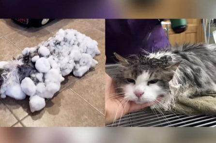 Chú mèo được cứu sống từ trạng thái bị đóng băng