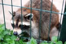 Năm 2018, hơn 500 cá thể động vật hoang dã được giải cứu