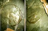 Bánh xe 300 triệu năm tuổi và những vết bánh xe cổ kỳ lạ khắp thế giới