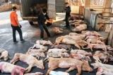 Thành lập Ban Chỉ đạo quốc gia phòng, chống bệnh tả lợn châu Phi