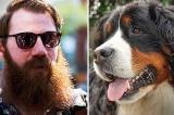 """Nghiên cứu: Râu đàn ông có nhiều vi khuẩn hơn lông chó """"đáng kể"""""""