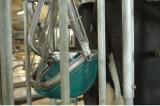 """Hà Lan: Phát minh ra """"nhà vệ sinh cho bò"""" để giảm ô nhiễm"""