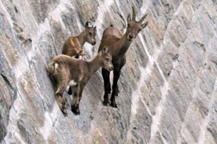"""""""Tay leo núi cừ khôi"""" có thể đi lại tự do trên vách đá dựng đứng"""