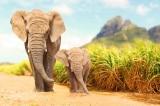 8 loài động vật trên cạn cao nhất thế giới
