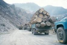 60 năm ĐCSTQ phá hủy môi trường ở Tây Tạng