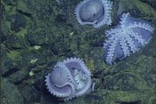 """Ảnh: Tàu ngầm tìm thấy """"nhà trẻ bạch tuộc"""" dưới đáy đại dương"""