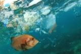 Ipsos: Việt Nam thải 1,8 triệu tấn rác thải nhựa mỗi năm