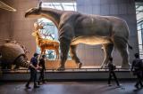 5 động vật có vú khổng lồ từng tồn tại thời tiền sử