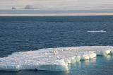 Băng biển tại Alaska đã hoàn toàn tan chảy
