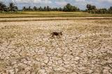 Phú Yên chi hơn 120 tỷ đồng khắc phục hạn hán