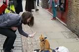 Người vô gia cư nghiện ma túy nặng được 'hồi sinh' nhờ một con mèo