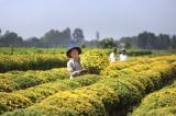 Dù Tết đã khác xưa, người Việt không bao giờ quên những truyền thống này