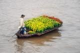 Vị mặn trong mỗi cánh hoa vàng