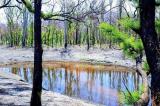 Những bức ảnh cho thấy màu xanh đang trở lại sau cháy rừng ở Úc