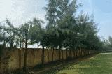 Công an điều tra vụ HS lớp 9 tử vong khi chặt cây trong trường