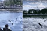 """Hiện tượng """"cá nhảy"""" dị thường xuất hiện ở nhiều nơi của Trung Quốc"""