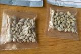 Mỹ cảnh báo người dân không trồng các hạt giống bất thường từ Trung Quốc