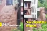 [VIDEO] Mưa lũ ở Trùng Khánh: Lầu ba nhà dân biến thành thác nước